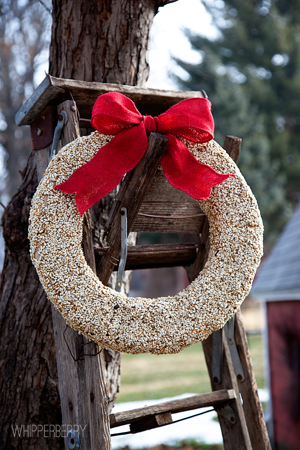 bird seed wreath from whipperberry