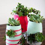 International Delights Succulent Garden by WhipperBerry