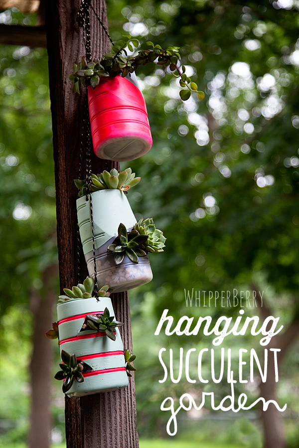 hanging succulent garden with International Delights #whatsyourid